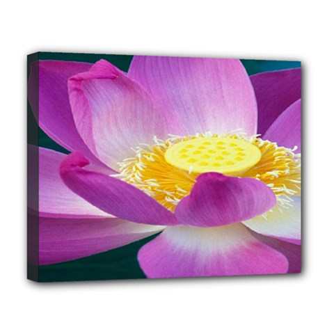 Pink Lotus Flower Deluxe Canvas 20  X 16   by BangZart