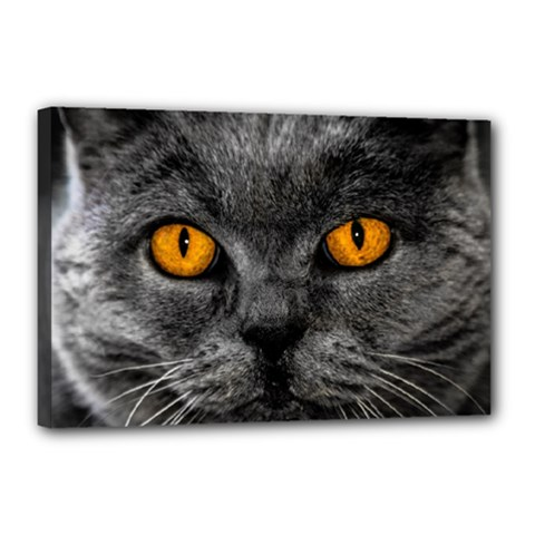 Cat Eyes Background Image Hypnosis Canvas 18  X 12  by BangZart