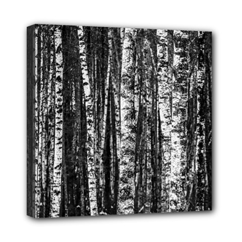Birch Forest Trees Wood Natural Mini Canvas 8  X 8  by BangZart