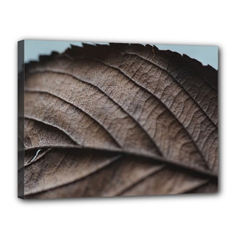 Leaf Veins Nerves Macro Closeup Canvas 16  X 12