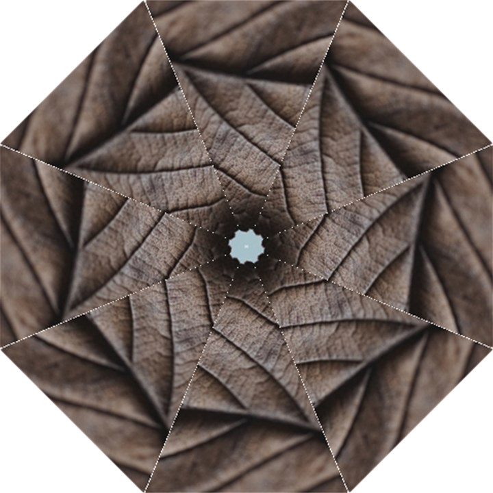 Leaf Veins Nerves Macro Closeup Folding Umbrellas