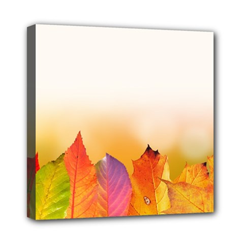 Autumn Leaves Colorful Fall Foliage Mini Canvas 8  X 8  by BangZart
