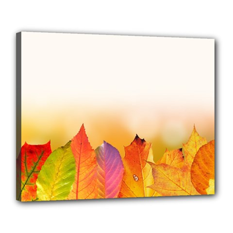Autumn Leaves Colorful Fall Foliage Canvas 20  X 16  by BangZart
