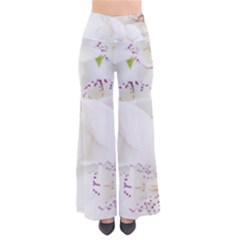 Orchids Flowers White Background Pants by BangZart