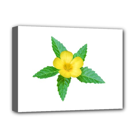 Yellow Flower With Leaves Photo Deluxe Canvas 16  X 12   by dflcprints