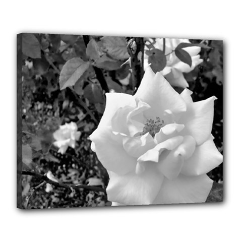 White Rose Black Back Ground Greenery ! Canvas 20  X 16  by CreatedByMeVictoriaB