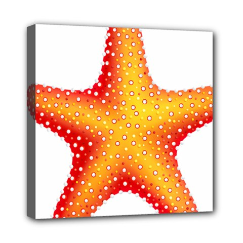 Starfish Mini Canvas 8  X 8  by BangZart