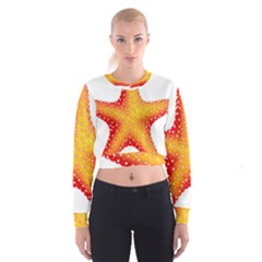 Starfish Cropped Sweatshirt