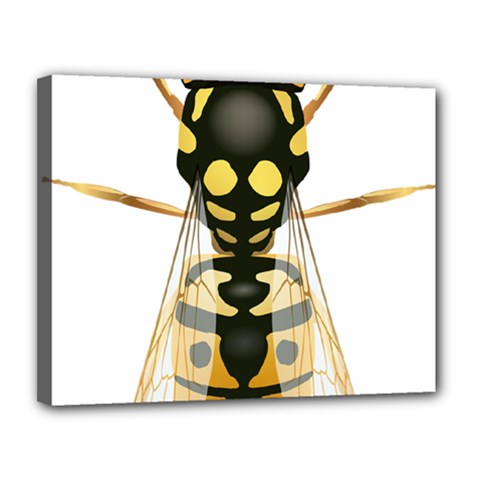Wasp Canvas 14  X 11  by BangZart