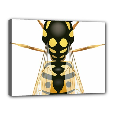 Wasp Canvas 16  X 12