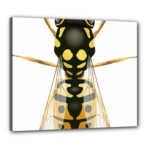 Wasp Canvas 24  X 20
