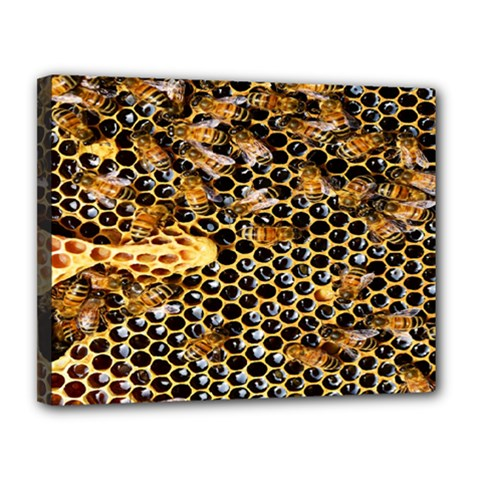 Queen Cup Honeycomb Honey Bee Canvas 14  X 11  by BangZart