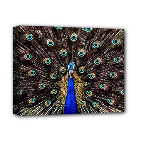 Peacock Deluxe Canvas 14  X 11  by BangZart