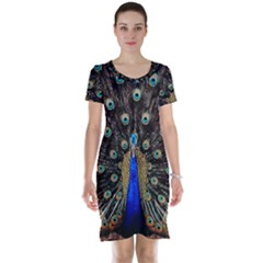 Peacock Short Sleeve Nightdress