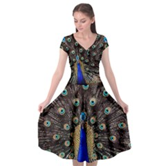 Peacock Cap Sleeve Wrap Front Dress
