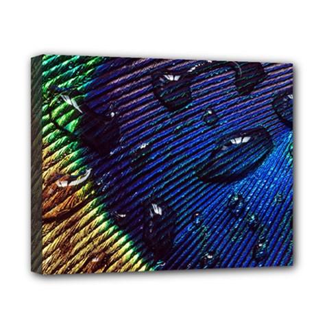 Peacock Feather Retina Mac Canvas 10  X 8