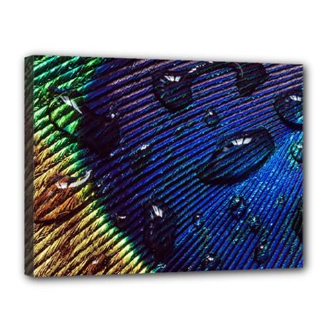 Peacock Feather Retina Mac Canvas 16  X 12  by BangZart
