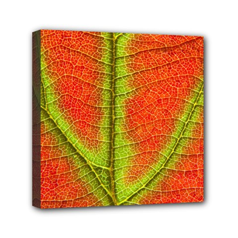 Nature Leaves Mini Canvas 6  X 6  by BangZart