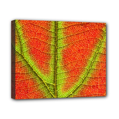 Nature Leaves Canvas 10  X 8  by BangZart