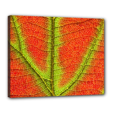 Nature Leaves Canvas 20  X 16  by BangZart