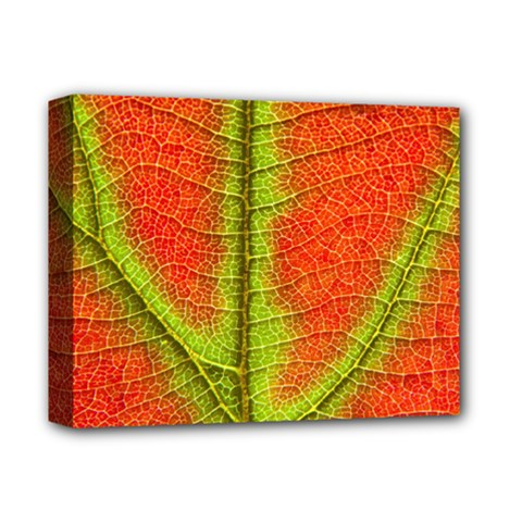 Nature Leaves Deluxe Canvas 14  X 11  by BangZart