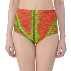 Nature Leaves High Waist Bikini Bottoms