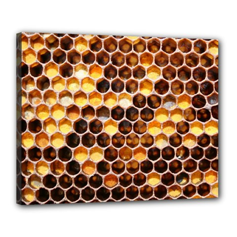 Honey Honeycomb Pattern Canvas 20  X 16