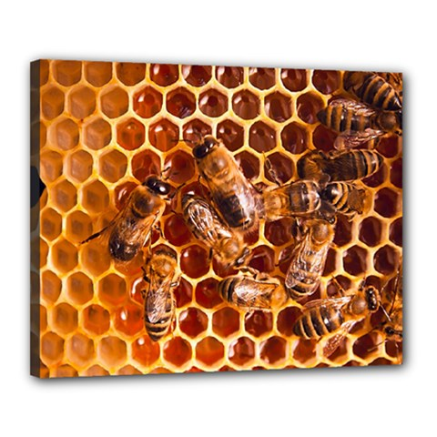 Honey Bees Canvas 20  X 16