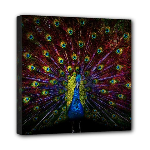 Beautiful Peacock Feather Mini Canvas 8  X 8  by BangZart