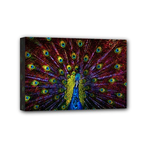 Beautiful Peacock Feather Mini Canvas 6  X 4