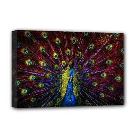 Beautiful Peacock Feather Deluxe Canvas 18  X 12