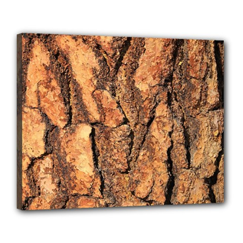 Bark Texture Wood Large Rough Red Wood Outside California Canvas 20  X 16