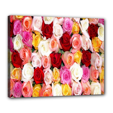 Rose Color Beautiful Flowers Canvas 20  X 16
