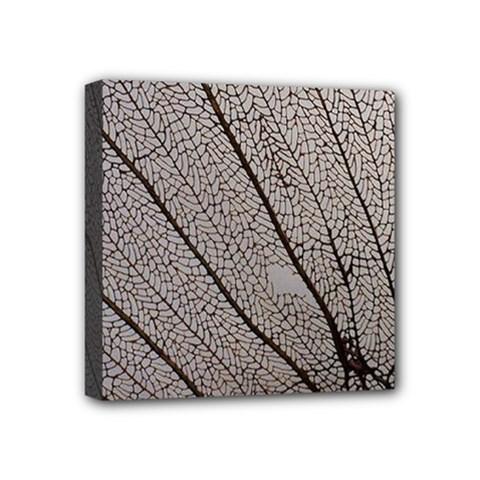 Sea Fan Coral Intricate Patterns Mini Canvas 4  X 4  by BangZart