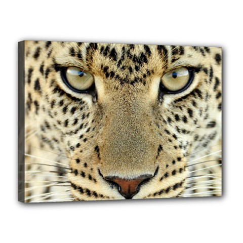 Leopard Face Canvas 16  X 12  by BangZart