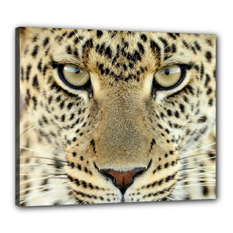 Leopard Face Canvas 24  X 20  by BangZart