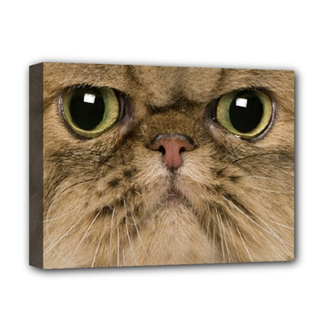 Cute Persian Catface In Closeup Deluxe Canvas 16  X 12   by BangZart