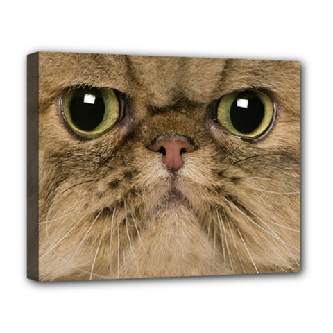 Cute Persian Catface In Closeup Deluxe Canvas 20  X 16