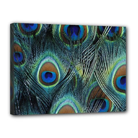 Feathers Art Peacock Sheets Patterns Canvas 16  X 12  by BangZart