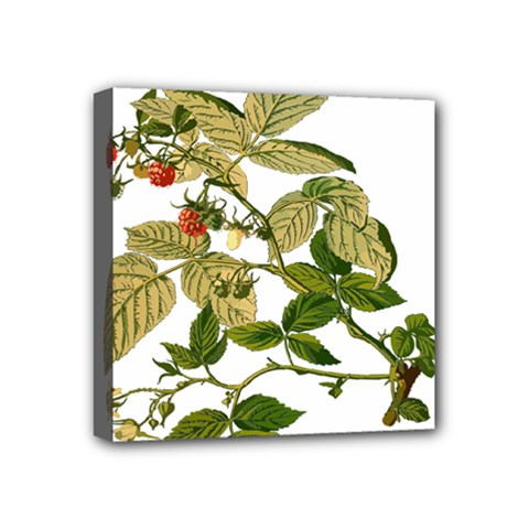 Berries Berry Food Fruit Herbal Mini Canvas 4  X 4  by Nexatart