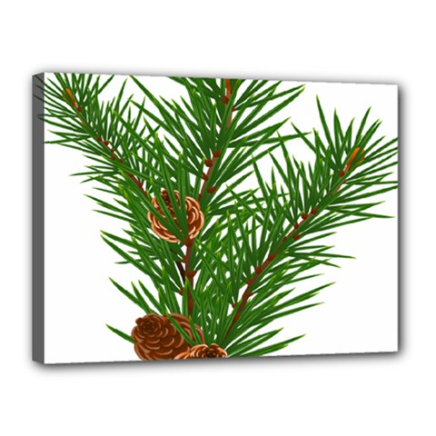 Branch Floral Green Nature Pine Canvas 16  X 12  by Nexatart