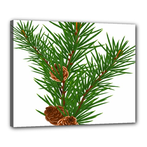 Branch Floral Green Nature Pine Canvas 20  X 16