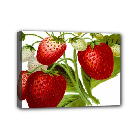 Food Fruit Leaf Leafy Leaves Mini Canvas 7  X 5