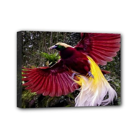 Cendrawasih Beautiful Bird Of Paradise Mini Canvas 7  X 5