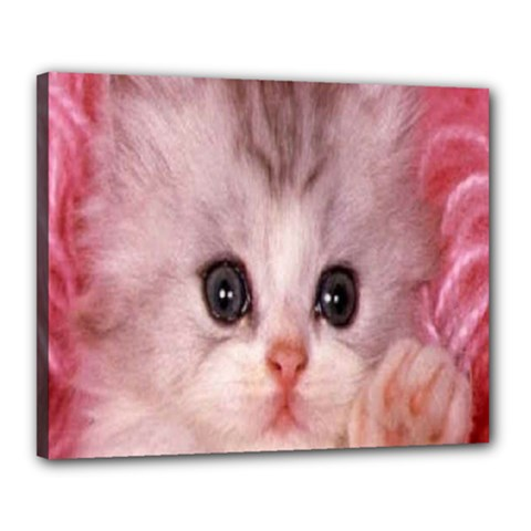 Cat  Animal  Kitten  Pet Canvas 20  X 16  by BangZart