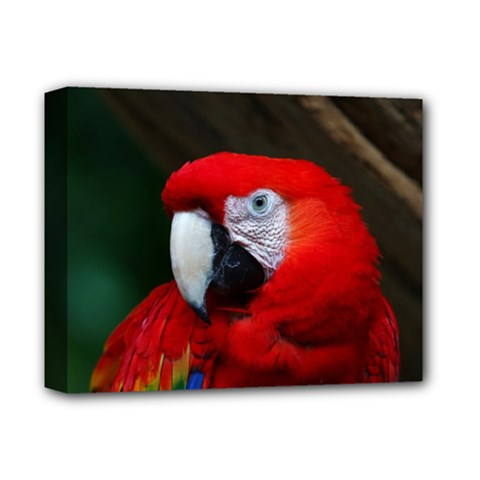 Scarlet Macaw Bird Deluxe Canvas 14  X 11  by BangZart
