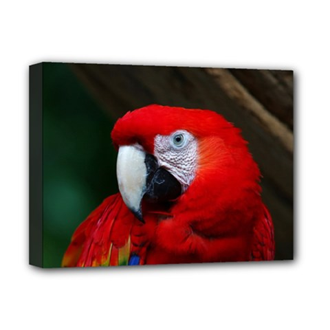 Scarlet Macaw Bird Deluxe Canvas 16  X 12