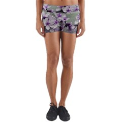 Branch Flowering Cherry Spring  Yoga Shorts by amphoto