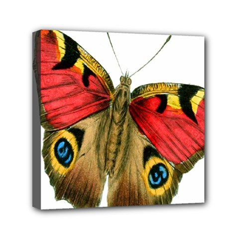 Butterfly Bright Vintage Drawing Mini Canvas 6  X 6  by Nexatart