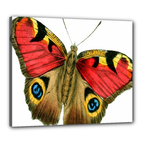 Butterfly Bright Vintage Drawing Canvas 24  X 20